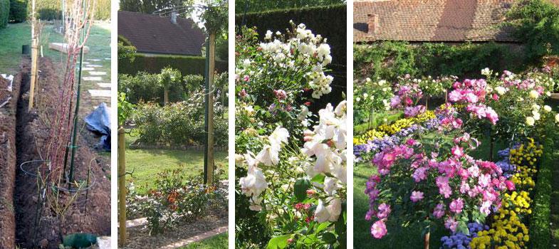 soci t fran aise des roses quel rosier choisir o et comment le planter que faire apr s. Black Bedroom Furniture Sets. Home Design Ideas