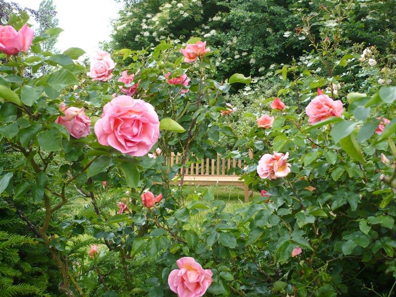 Soci t fran aise des roses roseraies priv es m ritant for Visite de jardins en france