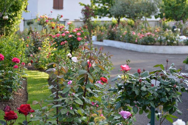 domaine du jardin des roses