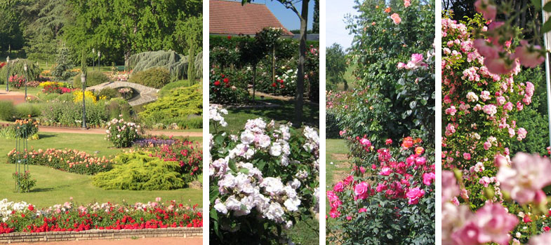 soci t fran aise des roses jardins de roses et rosiers remarquables. Black Bedroom Furniture Sets. Home Design Ideas